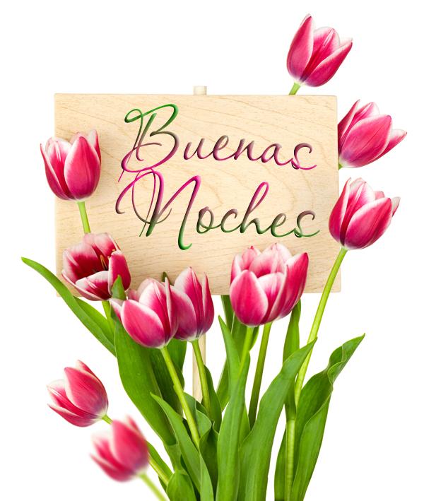 buenas noches tulipanes