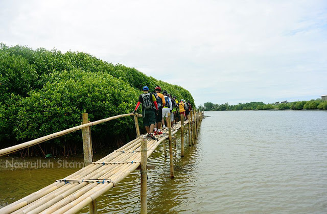 Hutan Mangrove Pantai Congot Porter Gunung Guide Mountain Paket
