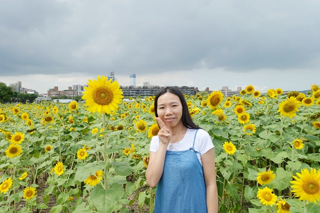 彩虹河濱公園向日葵花海