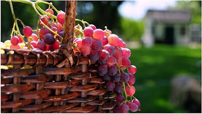 صور خلفيات فاكهة العنب HD
