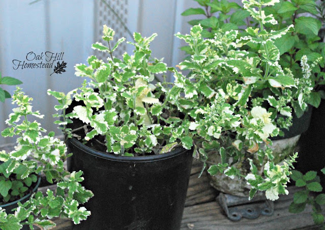How to increase your garden space by adding containers - from Oak Hill Homestead