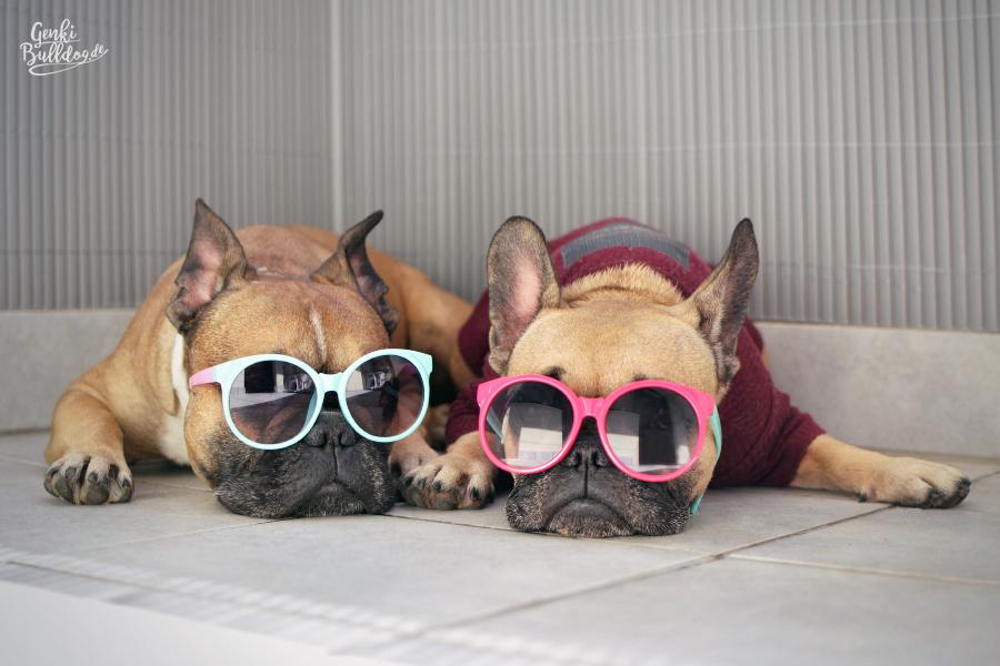 Hundeblog Genkibulldog Französische Bulldogge Bully Frenchie Sommer Sonnenbrille Foto Monatspfoto Smmerspaß Chille