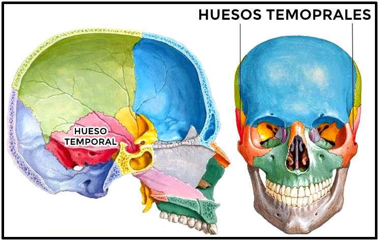 Huesos temporales del cráneo