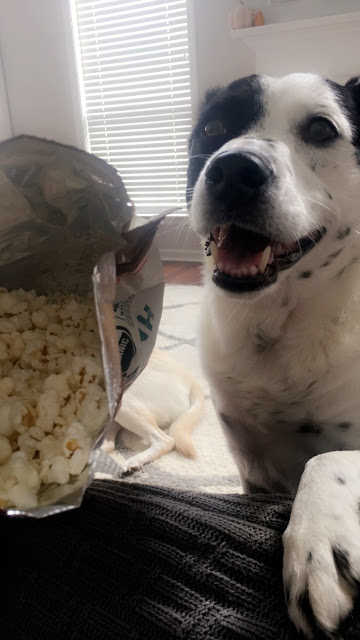 dog loves popcorn