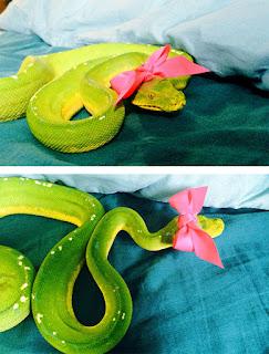 Una serpiente con un moño