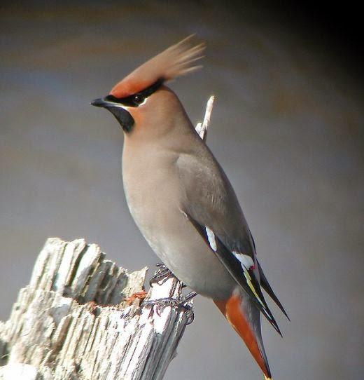 As mais Belas Aves do Mundo