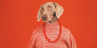 Masterclass: The Life & Artwork of William Wegman!! - Mon, April 19