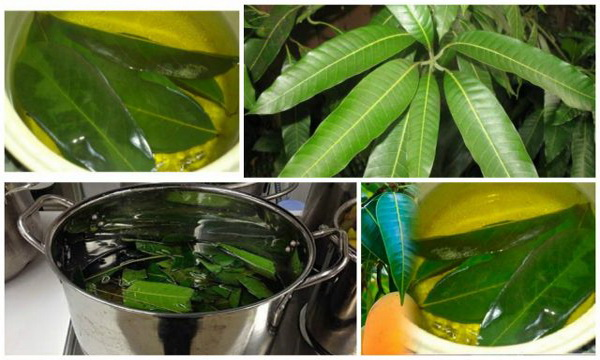 Boil These Leaves as Effective Cure To Diabetes,Without Medication!