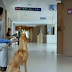 This Father Is Waiting Outside Delivery Room. When The Door Opens He Is Greeted To The Cutest Puppies Ever!