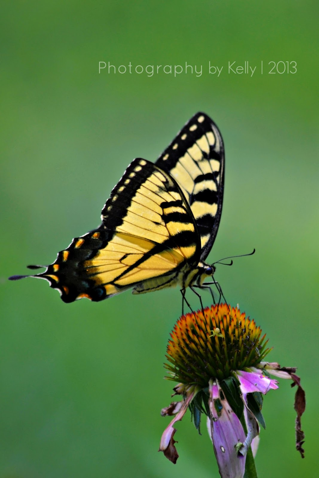 Butterfly flying away - photo#34
