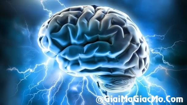 Giải mã giấc mơ thấy Não & ngủ nằm mơ thấy bộ Óc não
