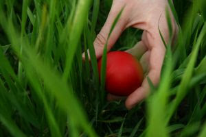 Image: Finding the perfect egg. Photo credit: Maja on FreeImages