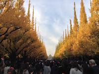 ginkgo trees tokyo