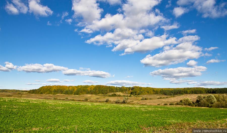 Осенний пейзаж. Поле, лес.