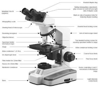 Cara Menggunakan Mikroskop secara Tepat