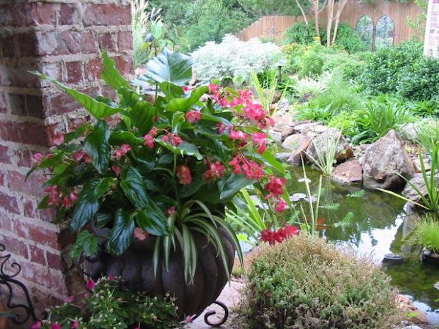 signature gardens containers annuals