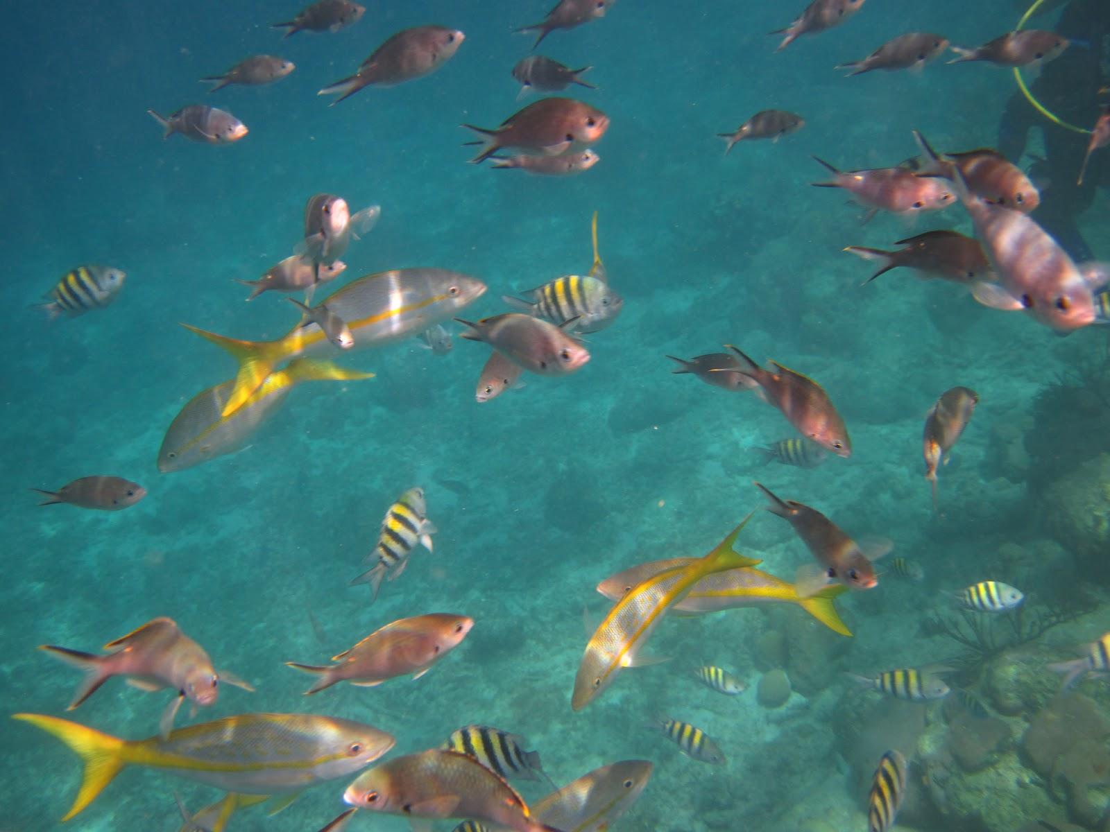 Kerstvakantie op Curaçao: december 2012  Tarpon