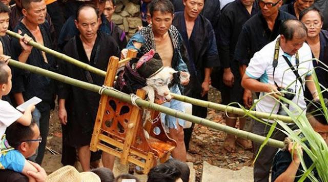 Anjing diperlakukan Bak Raja Pada Festival Tradisional