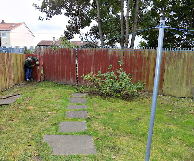 Hubby at work removing garden fence panels
