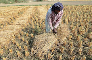 indian-farmer-option-trouble