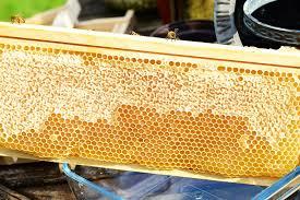 khasiat madu untuk ibu hamil dan menyusui