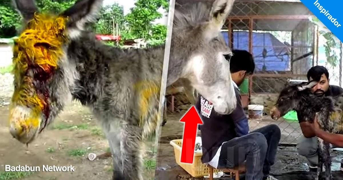 rescateanimal amordemadre increíblehistoria animalaidunlimitedindia bebéherido