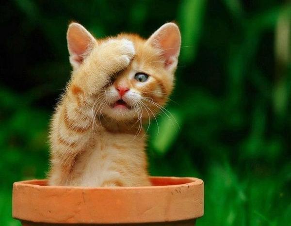 Gatito que se tapa un ojo