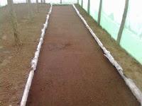 rasadnita ingropata la baza solului