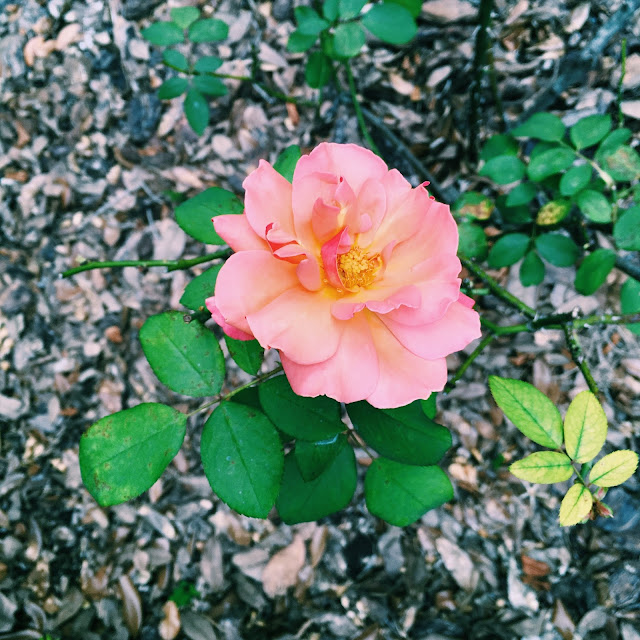 bok tower gardens, Lauren Banawa, lake wales, florida scenery, pink flower