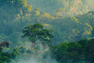 Hutan Lindung Lampeong-Gunung Lumut