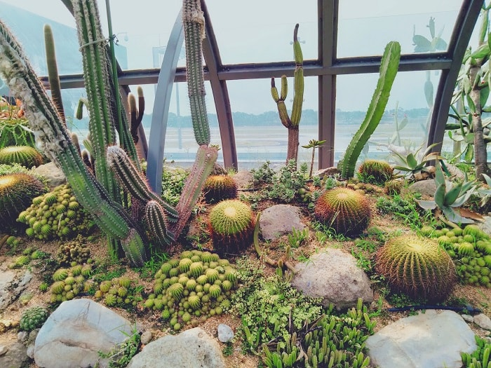 Cactus Garden at Changi Terminal 1