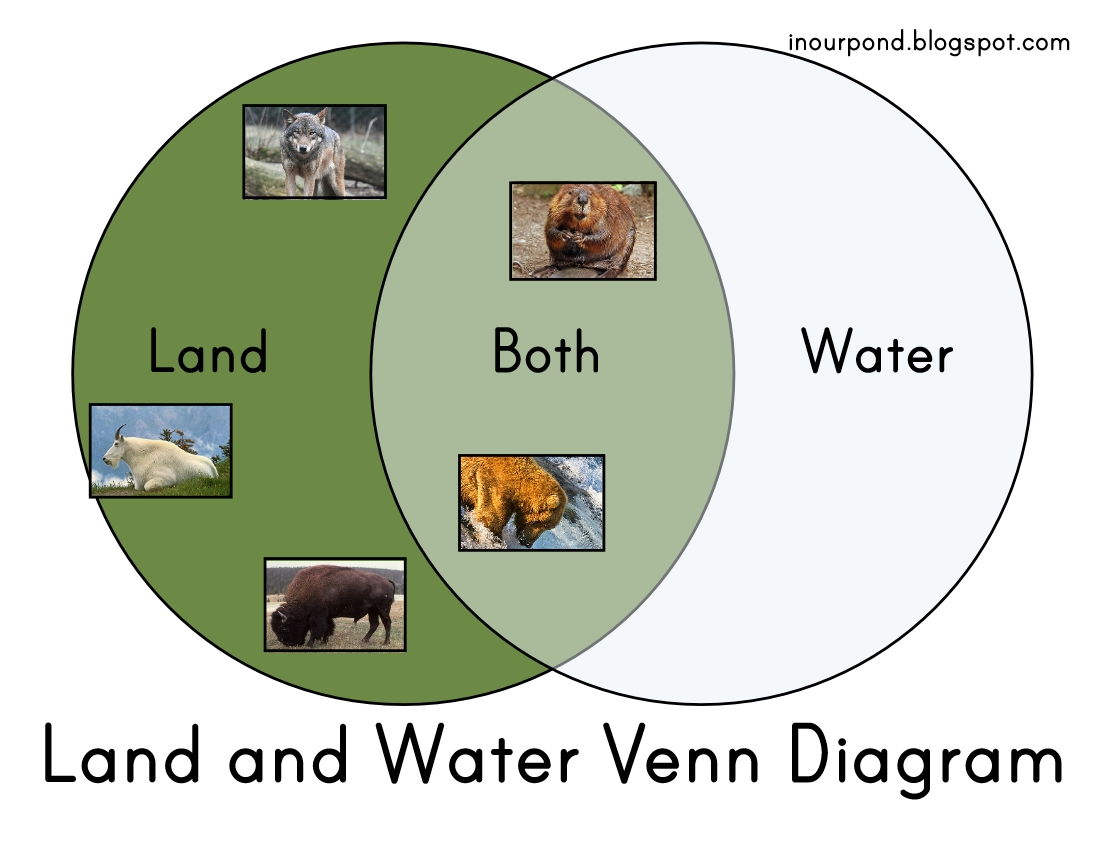 Land And Water Venn Diagram