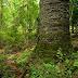 Brasil será palco de discussões sobre pesquisa florestal