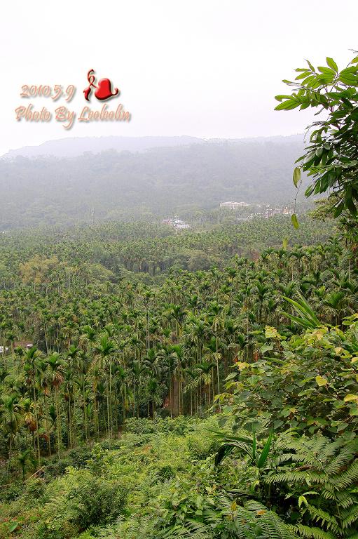 [雲林古坑景點] 華山文學步道
