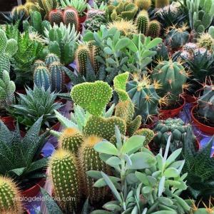 Cactus y Suculentas: si tú me dices ven