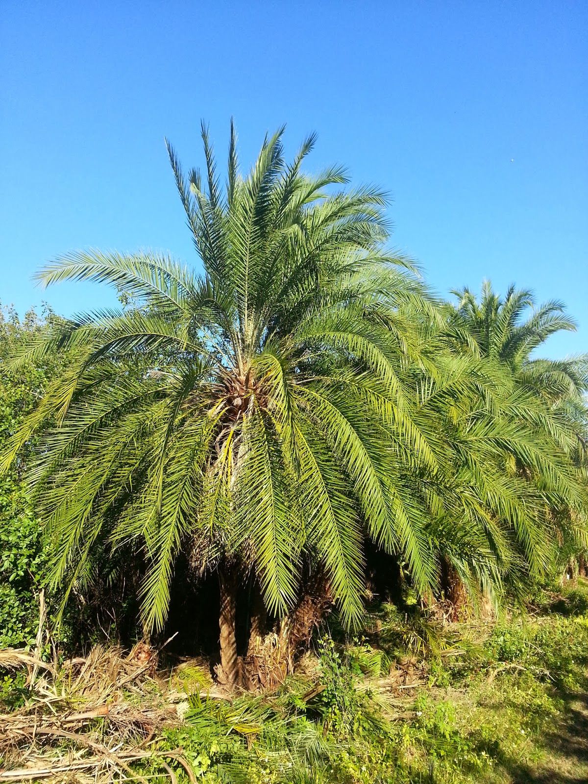A Quality Plant 1 26 14 2