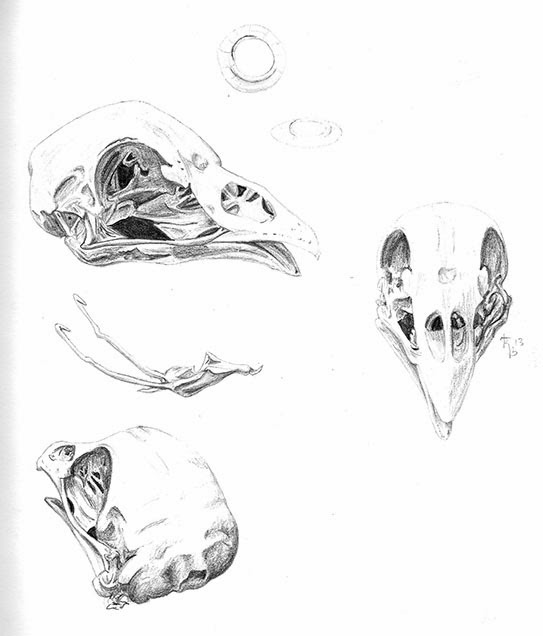 Inky Phalangies Thoughts: Chicken skull