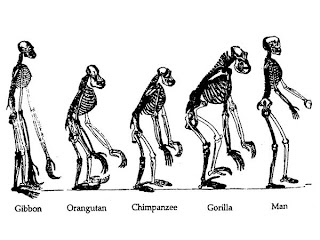 The teach Zone: Human Evolution Timeline Interactive Picture!