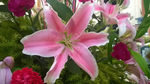 bhubaneshwar, flower, orissa