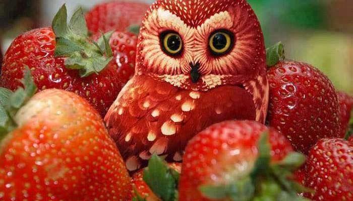 terbuat dari strawberry