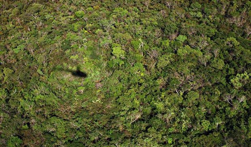 Piauí é o quarto Estado do país em desmatamento da Mata Atlântica