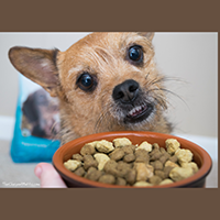 Only Natural Pet PowerFusion Small Breed Dog food review
