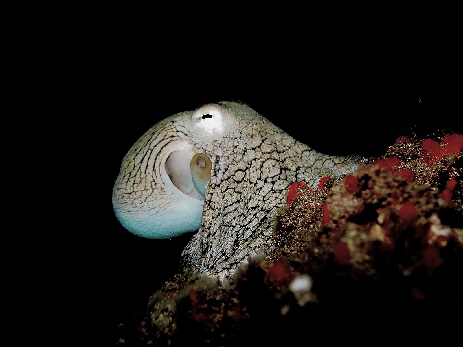 Capturing The Moment Strange Sea Creatures