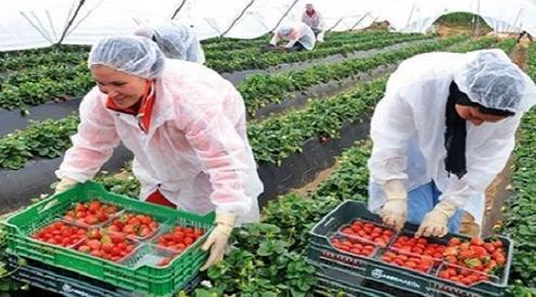 تعاونيات زراعية إسبانية توظيف 34 عامل وعاملة موسمي بأنابيك شفشاون FRESHUELVA%2BESPAGNE%2Bemploi%2Bmaroc
