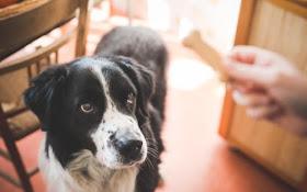 0e70c63aaff2 Πόσο έξυπνος είναι ο σκύλος σου  Κάνε το τεστ για να μάθεις ...