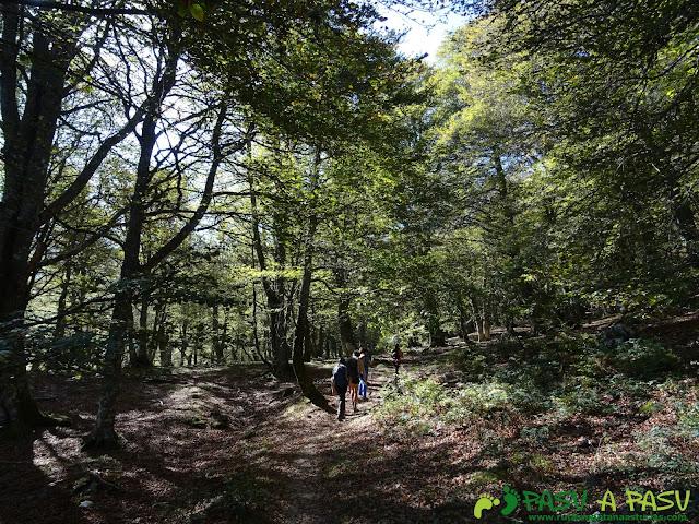Ruta Vega Pociellu y Bosque Fabucao: saliendo en el Bosque de Fabucao
