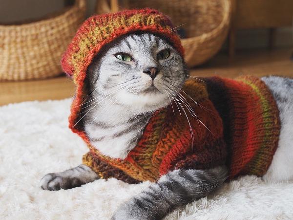 フードをかぶってドヤ顔の猫