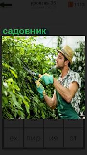 около кустов стоит садовник с ножницами и подрезает ветки