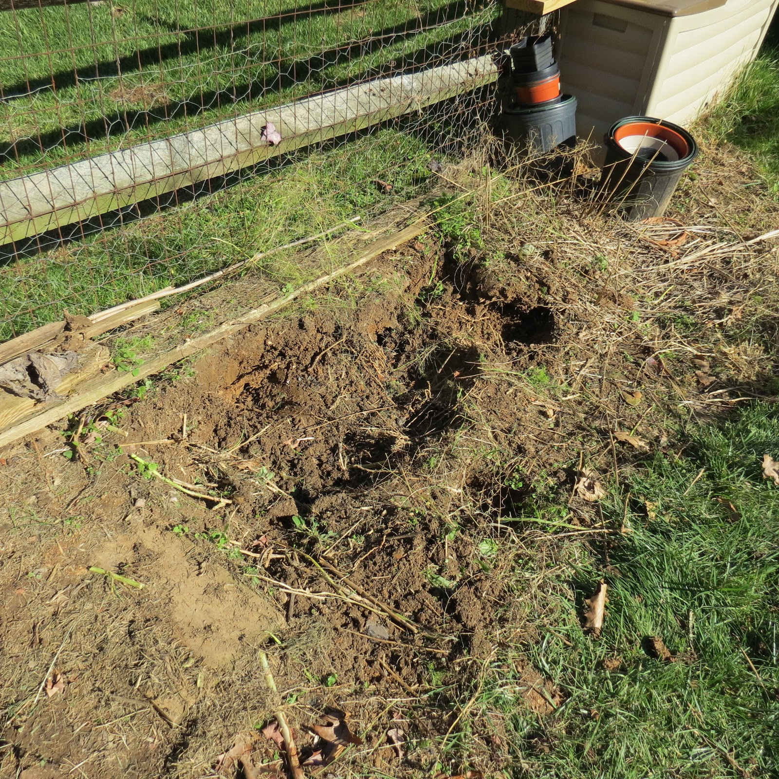 Best Place To Plant Asparagus: The Rusted Vegetable Garden