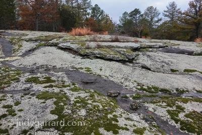 Moss and lichen on granite